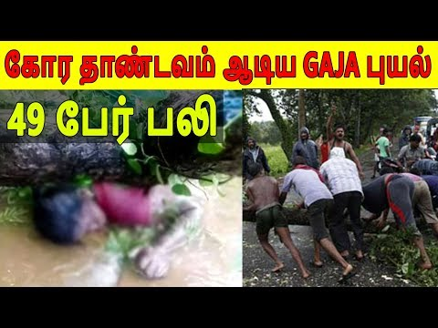 கஜா புயலின் பாதிப்பு | Impact of Cyclone Gaja | Disaster for Tamilnadu | The Rooster News