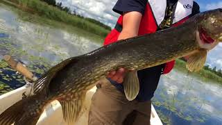 Kesälomalla - Haukea heinikosta - Kalastustekniikat - Hauenkalastus - Spintube