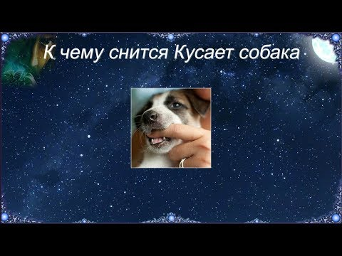 К чему снится Кусает собака (Сонник)