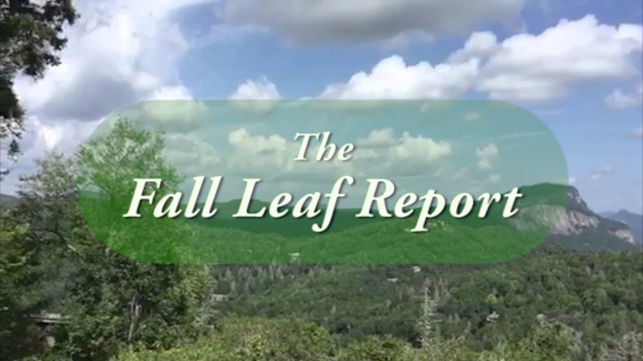 Coming Soon!  The Fall Leaf Report