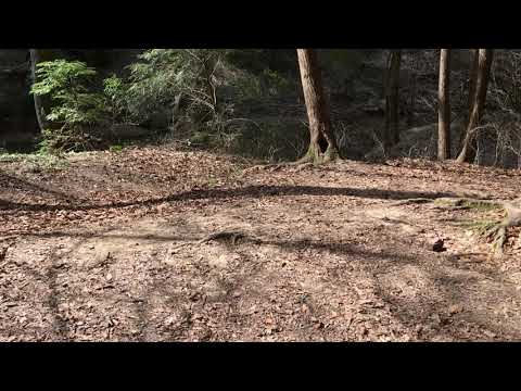 Video Of Sipsey Wilderness Backcountry Site (Trail 200 Site F), AL
