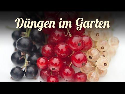 Düngen im Garten | Beeren und Obst | Biologisch Dynamisch