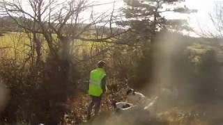 Gascon Saintongeois chasse aux sangliers