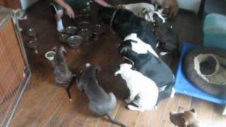 Собачья столовая