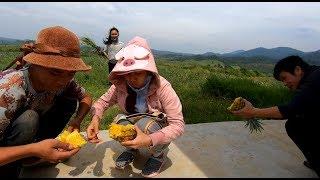 Lần đầu ăn Dứa Lê Dương Lâm Đồng - Hương vị đồng quê - Bến Tre - Miền Tây