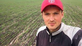 Обзор пшеницы по предшественникам подсолнух\пшеница  18/04/2018