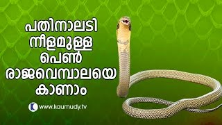 Vava Suresh Captures A large King Cobra | SNAKE MASTER