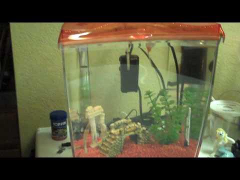 Marina 2.65 Gallon Goldfish Starter Tank Aquarium Review