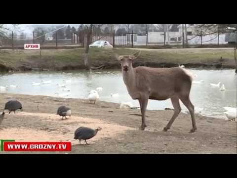 В Ножай Юртовском районе с. Беной Чечни появился природный парк