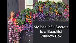 My Beautiful Secrets To A Beautiful Window Box   Container Gardening
