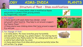 AIMS TODAY Live Stream – 3RD JUNE 2020 – 6TH CLASS – BIOLOGY (3 PM TO 3:45 PM SESSION)