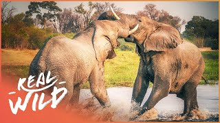 Elephants Can Be The Most Dangerous Animal | The Dark Side Of Elephants | Wild Things Shorts