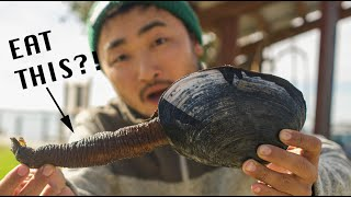 ONE OF NATURE'S STRANGEST LOOKING DELICACIES | Coastal Foraging For Big Clams