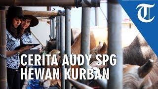 Cerita Audy SPG Hewan Kurban Milik Haji Doni, Sempat Takut di Seruduk Sapi