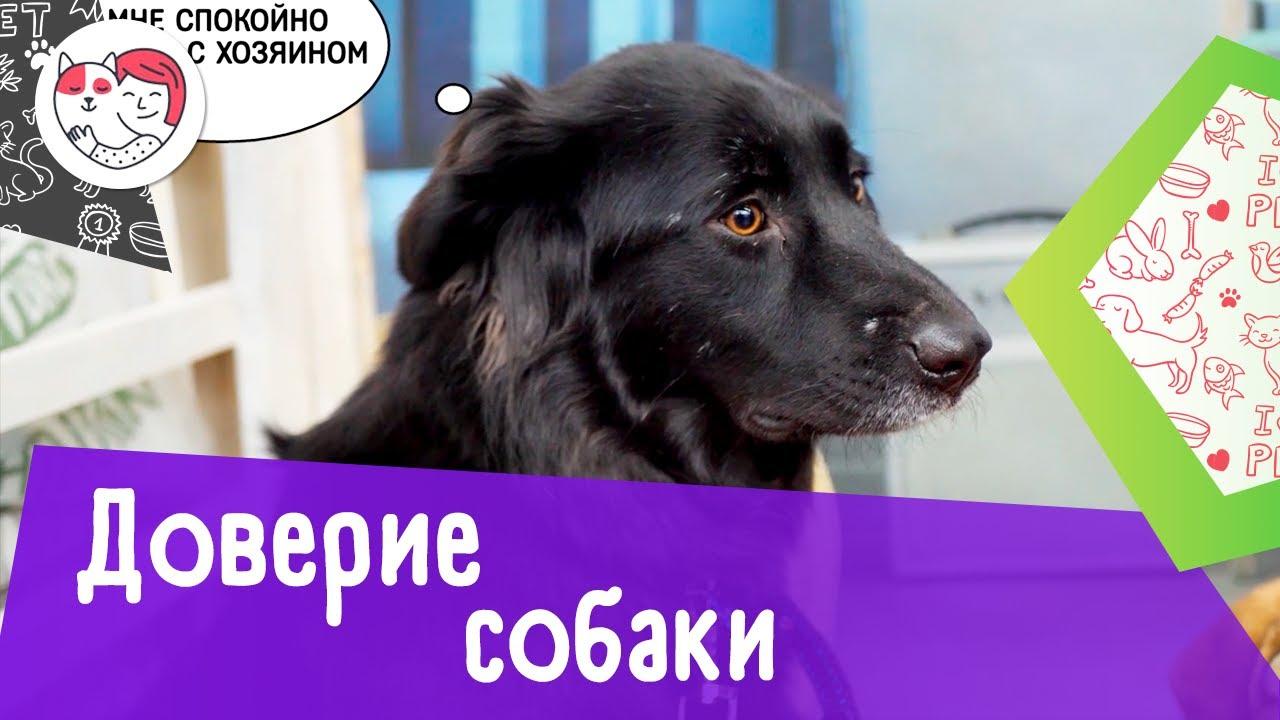 7 доказательств того, что собака вам доверяет