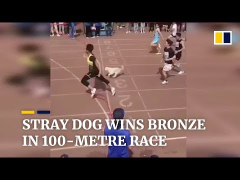 Stray dog 'Little White' joins 100-metre race, and wins the bronze