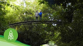 This Couple Nursed a Rainforest Back to Life