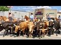 TDW 1738 - Cattle Drive Thru Downtown !