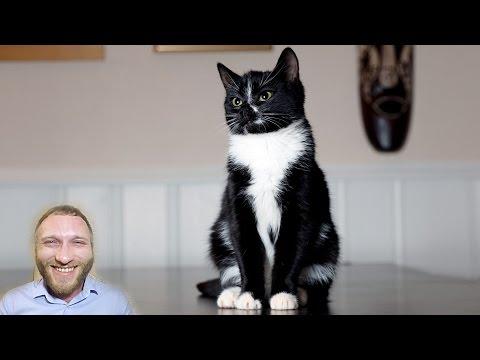 Анекдот про исхудавшего кота