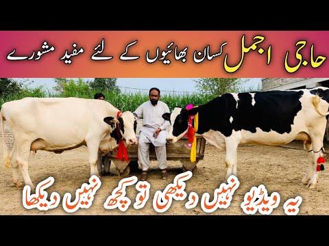 , title : 'Haji Ajmal Bhalwal   Top class Australian cows   Bhot achi achi Batein   Good cows