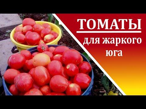 Какие томаты сажать  на юге России