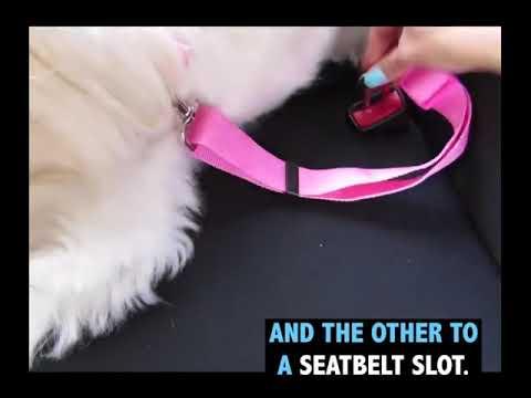 💥Dog Need Seat Belt In The Car! What If Not? 😱