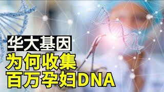 华大基因收集孕妇DNA并且华大基因针对少数民族基因,使用基因编辑强化军事让中共取得战略优势【时事追踪】