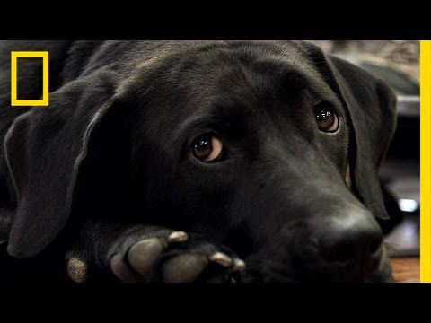 How Rescue Dogs Are Helping Veterans With PTSD | National Geographic thumbnail