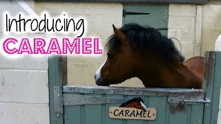 Meet Caramel | New Pony