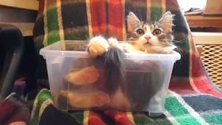 Котейка в коробочке