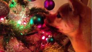 Arashi discovers the Christmas tree