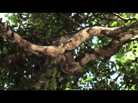 As preguiças de Rio Tinto - PNR Caravanas 2, programa 8