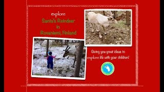 Santa's Reindeer at Wild Nordic in Rovaniemi