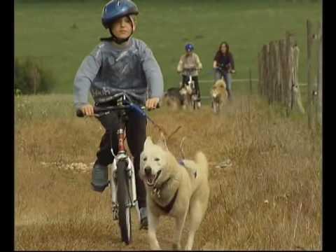 A la découverte de l'attelage à chiens et du monde trappeur
