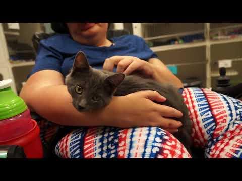 Video: WCJC Animal Shelter, July 13