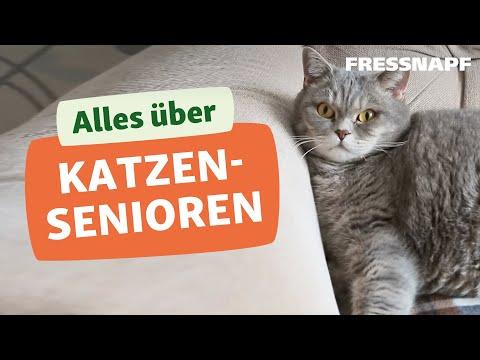 Katzenomas - Wie Katzen alt werden und sich verändern