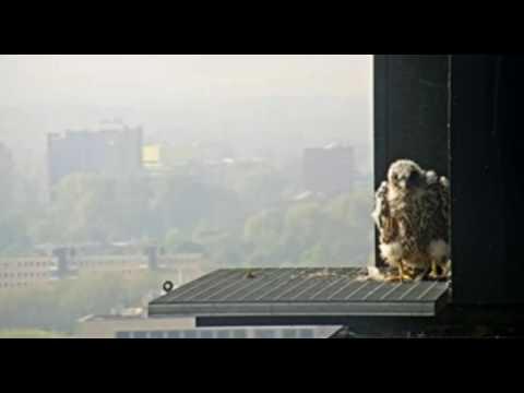 Uit het nest (Amsterdam) - 13 mei 2017