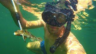 Подводная рыбалка у берега моря