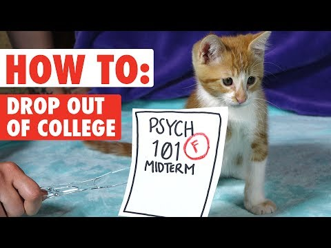 How to Drop Out of College – WITH KITTENS!   Funny Kitten Video 2017