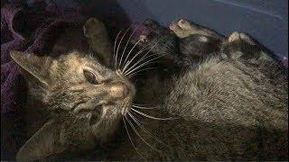 Nat Nat The Wonder Cat - The Fastest Kitten Birth - Not So Feral, Feral