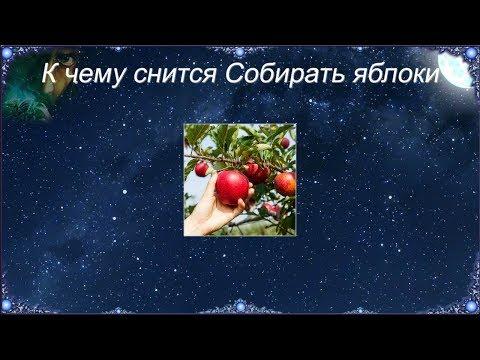 К чему снится Собирать яблоки (Сонник)