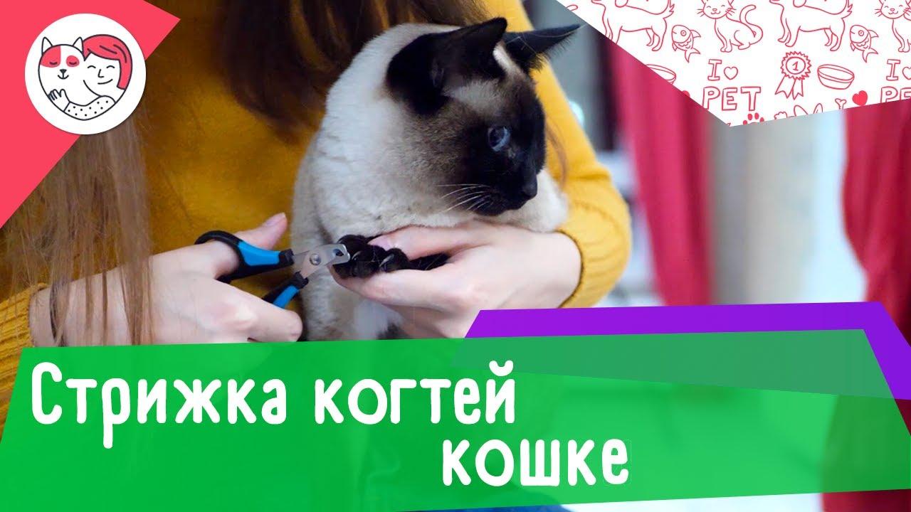 Как подстричь кошке когти в домашних условиях: видеоинструкция