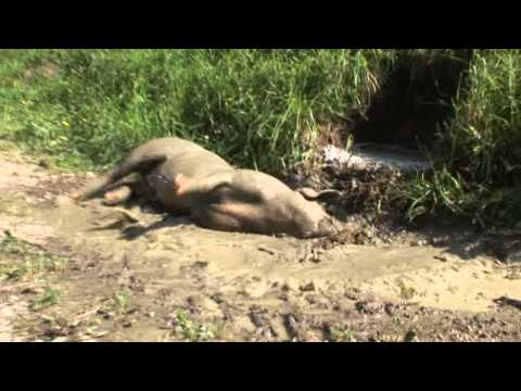 Ausflug mit unserem Schweinderl