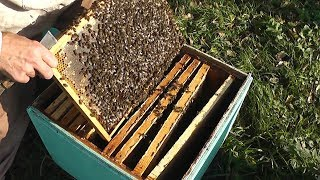 тёплый октябрь 2018г ,а у пчёл в ульях,всё как надо