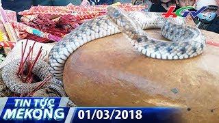 Xôn xao cặp rắn thần xuất hiện trên ngôi mộ vô danh | TIN TỨC MEKONG - 01/03/2018