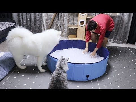 Cat and Dog Inspect an Ice Bath