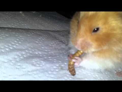 Wie man mit den Kürbissamen essen muss dass den Würmern entgehen wird