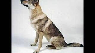 Wolfdog - Alex c du hast ...