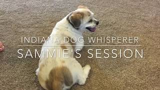 "Success Story ""Sammie's Session"""