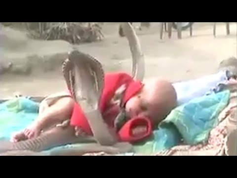 Baby And Cobra Cuddle In Shocking Vid